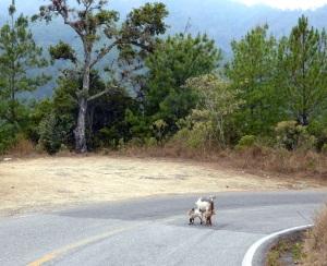 Bike Trip Puerto Angel 091