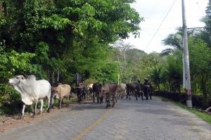 Bike Trip Arenal 176