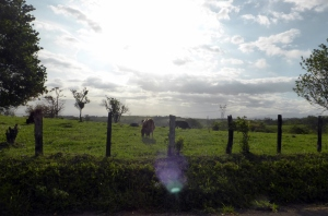 Bike Trip Arenal 278