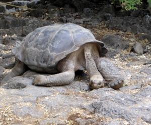 Bike Trip Galapagos 424