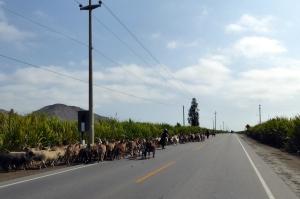 Bike Trip Cuzco 087