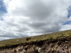 Bike Trip Cuzco 458